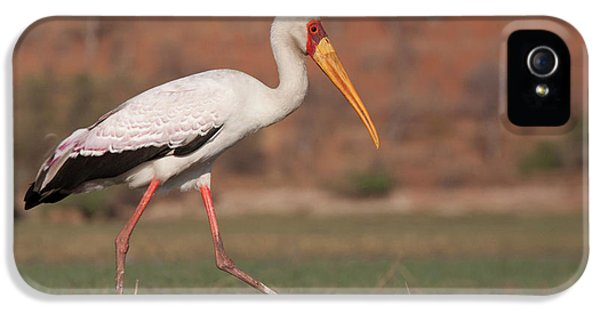 Africa, Botswana, Chobe National Park IPhone 5 / 5s Case by Jaynes Gallery