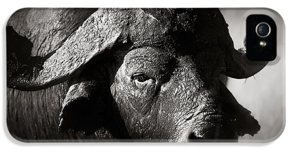 Dirty iPhone 5 Cases - African buffalo bull close-up iPhone 5 Case by Johan Swanepoel