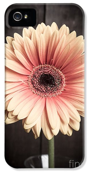 Carnations iPhone 5 Cases - Aster flower iPhone 5 Case by Edward Fielding