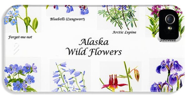 Forget Me Not iPhone 5 Cases - Alaska Wild Flower Poster iPhone 5 Case by Sharon Freeman