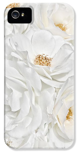 Ivory Rose iPhone 5 Cases - All the White Roses  iPhone 5 Case by Jennie Marie Schell