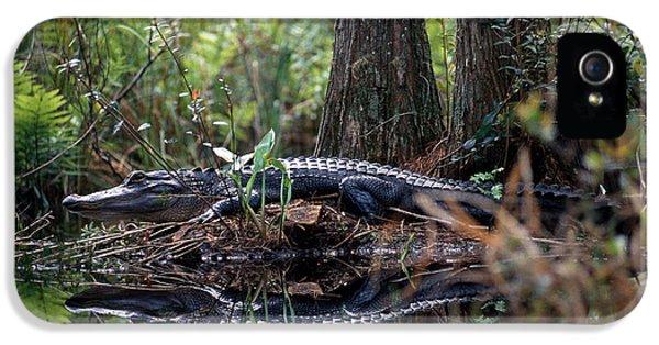 Alligator In Okefenokee Swamp IPhone 5 / 5s Case by William H. Mullins