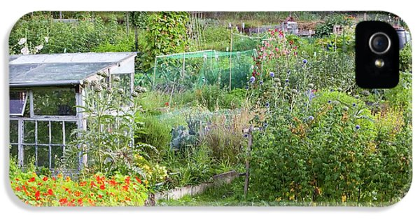 Allotments IPhone 5 / 5s Case by Ashley Cooper