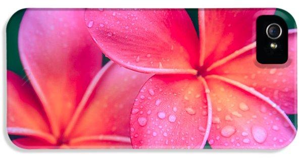Aloha Hawaii Kalama O Nei Pink Tropical Plumeria IPhone 5 / 5s Case by Sharon Mau