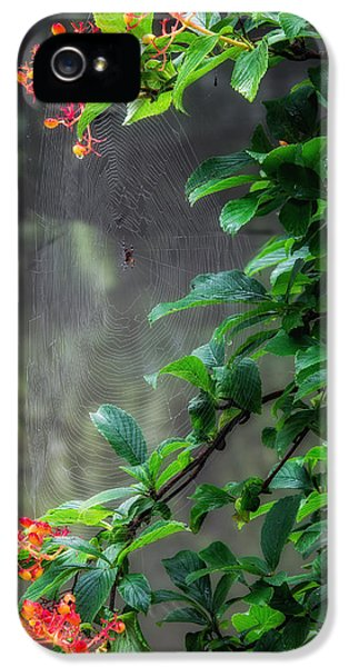 Spider iPhone 5 Cases - Along Came A Spider iPhone 5 Case by Bill  Wakeley