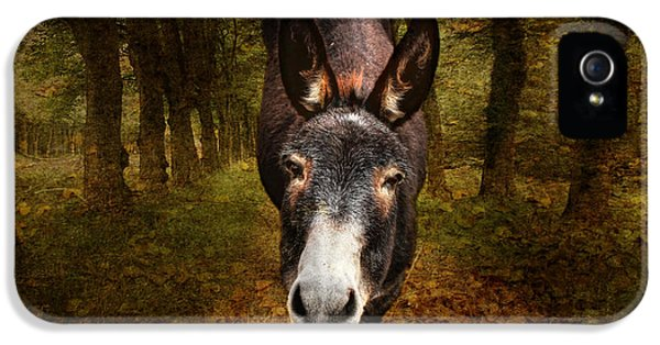 Donkey iPhone 5 Cases - And You Are  ??? iPhone 5 Case by Donna Kennedy