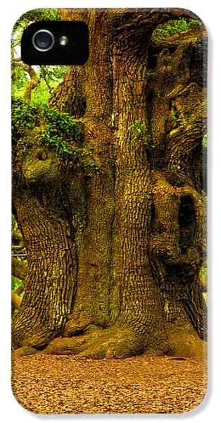 Historic Oak iPhone 5 Cases - Angel Live Oak Trunk iPhone 5 Case by Louis Dallara
