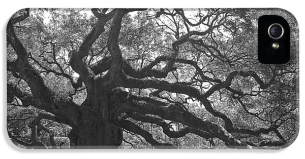 Historic Oak iPhone 5 Cases - Angel Oak II - Black and White iPhone 5 Case by Suzanne Gaff