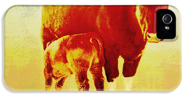 Livestock iPhone 5 Cases - Animals Cow and Calf iPhone 5 Case by Ann Powell