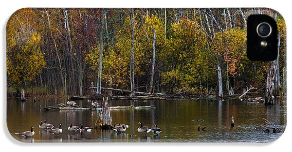 Greet iPhone 5 Cases - Annual Meet and Greet at the Pond iPhone 5 Case by Robin Webster
