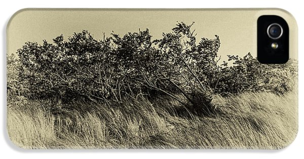 Apollo Beach Grass IPhone 5 / 5s Case by Marvin Spates