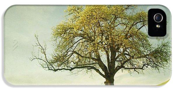 Meadow iPhone 5 Cases - Appletree iPhone 5 Case by Priska Wettstein
