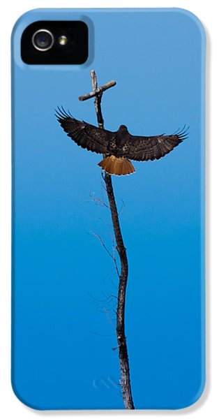 Redtail iPhone 5 Cases - Approaching Perfection iPhone 5 Case by Ernie Echols