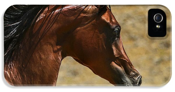 Arabian iPhone 5 Cases - Arabian Mare II iPhone 5 Case by Holly Martin