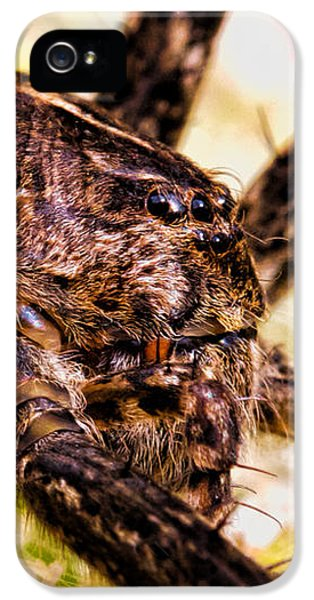 Spider iPhone 5 Cases - Arachnophobia iPhone 5 Case by Bob Orsillo