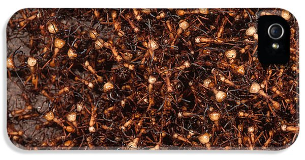 Army Ants IPhone 5 / 5s Case by Art Wolfe