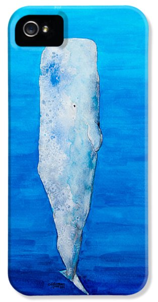 Whale iPhone 5 Cases - Ascent iPhone 5 Case by Alexandra Nicole Newton