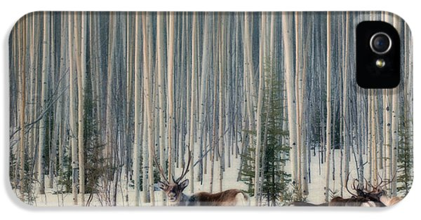 Caribou iPhone 5 Cases - Caribou and trees iPhone 5 Case by Priska Wettstein