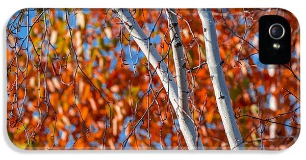 Autumn iPhone 5 Cases - Aspen iPhone 5 Case by Sebastian Musial
