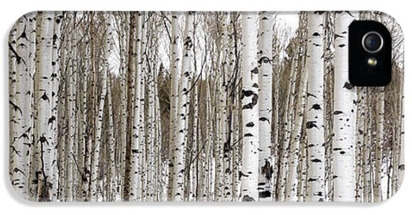 Aspens In Winter Panorama - Colorado IPhone 5 / 5s Case by Brian Harig