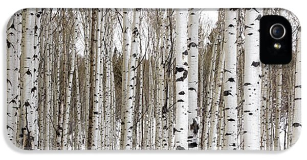 Image iPhone 5 Cases - Aspens In Winter Panorama - Colorado iPhone 5 Case by Brian Harig