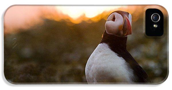 Atlantic Puffin At Sunrise Skomer IPhone 5 / 5s Case by Sebastian Kennerknecht