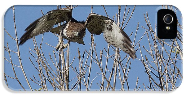 Redtail iPhone 5 Cases - Attack iPhone 5 Case by Ernie Echols