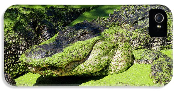 Australia, Broome IPhone 5 / 5s Case by Cindy Miller Hopkins