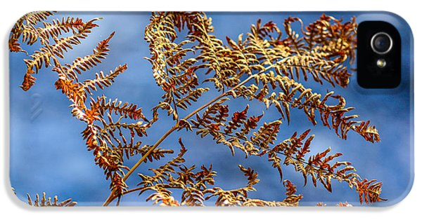 Chlorophyll iPhone 5 Cases - Autumn Fern iPhone 5 Case by Toppart Sweden
