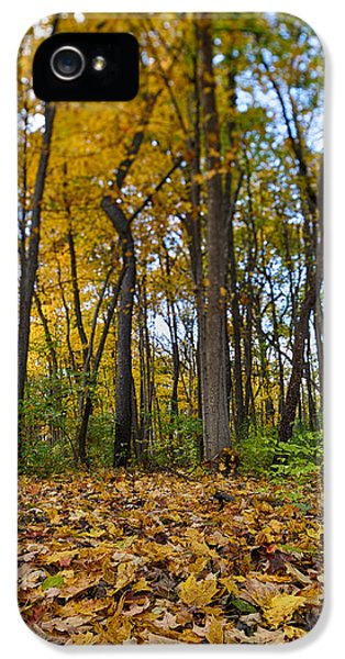 Foliage iPhone 5 Cases - Autumn is Here iPhone 5 Case by Sebastian Musial