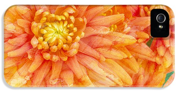 Orange iPhone 5 Cases - Autumn Mums iPhone 5 Case by Heidi Smith