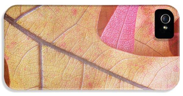 Environment Concept Art iPhone 5 Cases - Autumn Oak  iPhone 5 Case by Heidi Smith