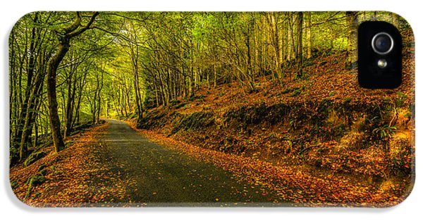 Forrest iPhone 5 Cases - Autumn Road iPhone 5 Case by Adrian Evans