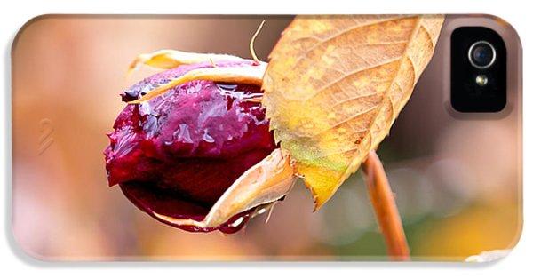 Autumn Rosebud IPhone 5 / 5s Case by Rona Black