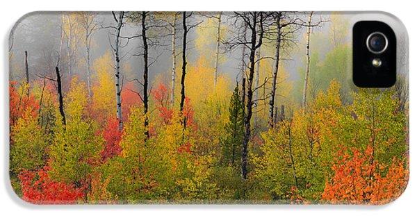 Autumn Shades IPhone 5 / 5s Case by Leland D Howard