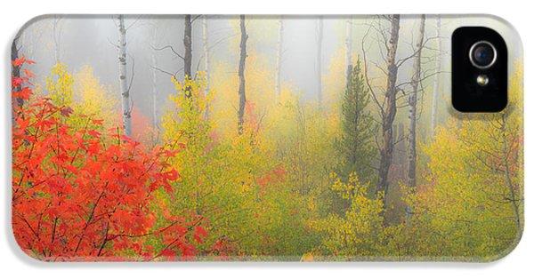 Autumn Silence IPhone 5 / 5s Case by Leland D Howard