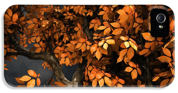 Trees iPhone 5 Cases - Autumn Storm iPhone 5 Case by Cynthia Decker