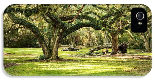 Historic Oak iPhone 5 Cases - Avery Island Oaks iPhone 5 Case by Scott Pellegrin
