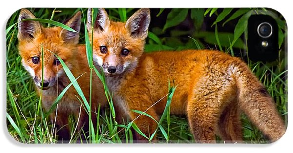 Fox Kits iPhone 5 Cases - Babes In The Woods iPhone 5 Case by Steve Harrington
