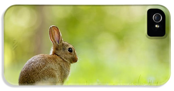 Bunny iPhone 5 Cases - Baby Bunny in the Forest iPhone 5 Case by Roeselien Raimond