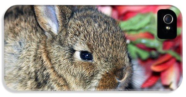 Young Rabbit iPhone 5 Cases - Baby Bunny Rabbit iPhone 5 Case by Karon Melillo DeVega