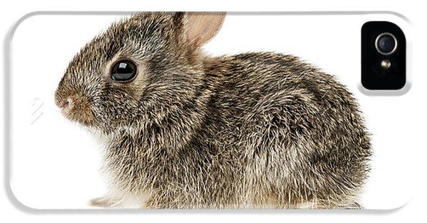 Young Rabbit iPhone 5 Cases - Baby cottontail bunny rabbit iPhone 5 Case by Elena Elisseeva