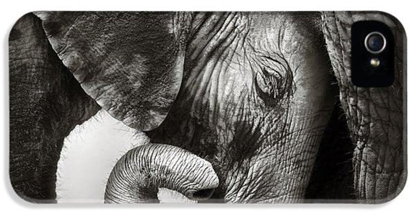 Face iPhone 5 Cases - Baby elephant seeking comfort iPhone 5 Case by Johan Swanepoel