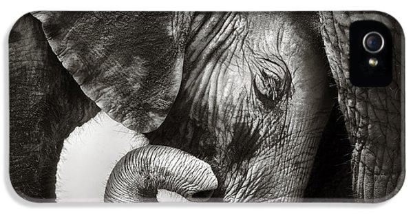 Baby Elephant Seeking Comfort IPhone 5 / 5s Case by Johan Swanepoel