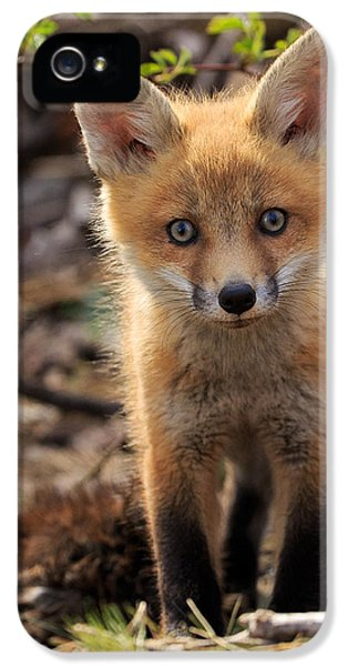 Fox Kits iPhone 5 Cases - Baby in the Wild iPhone 5 Case by Everet Regal