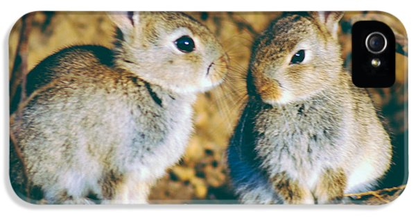 Young Rabbit iPhone 5 Cases - Baby rabbits iPhone 5 Case by A Rey