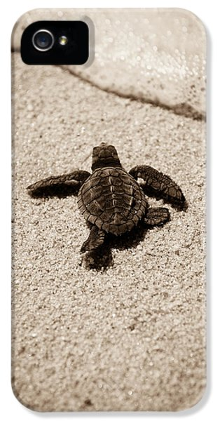 Conservation iPhone 5 Cases - Baby Sea Turtle iPhone 5 Case by Sebastian Musial
