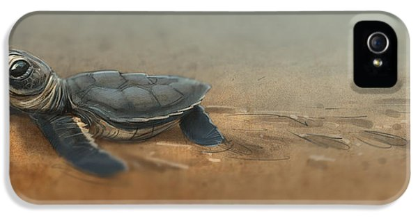 Baby Turtle IPhone 5 / 5s Case by Aaron Blaise