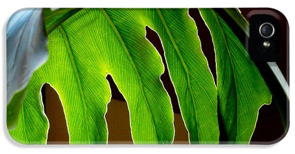 Chlorophyll iPhone 5 Cases - Backlit Frond iPhone 5 Case by Al Bourassa