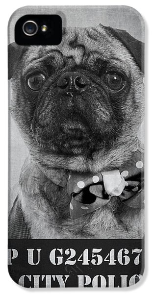 Bad iPhone 5 Cases - Bad Dog iPhone 5 Case by Edward Fielding